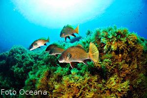Cumbre biodiversidad