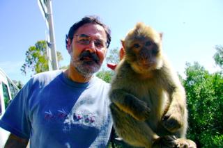 Macacos de Gibraltar 1